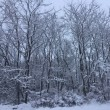 大雪と寒波