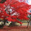 鶴ヶ城もみじ紅葉 2012.11.23