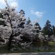 桜の中を。。。。