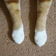 福の白靴下