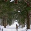 長野市・戸隠神社奥社 雪の参道