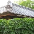 埼玉県川越市 スナップ写真 2018年5月24日