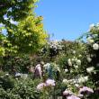 トッポパパの日本気まぐれ紹介、  その225 『イングリッシュ・ガーデン』 その6