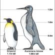 ニュージーランドで、「怪物」サイズのペンギンの化石発見!