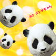 もうすぐ誕生日!なパンダのシャンシャンを観に行こう〜!