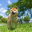 犬の身体に関する『10の豆知識』