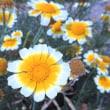 清楚な 花が勢揃い