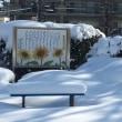 1月22~23日の大雪