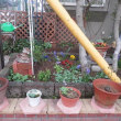 春ガーデン