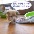 2018 2/22★ルイとにゃあちゃん★ホテルはまろん君です(^^ゞ