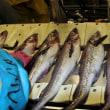 Море минтая: о тонкостях рыбопереработки