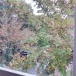 肌寒い日が続きますね 那須の紅葉もすすんでいます