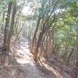 野ねずみ山日記 皿倉山 国見岩コース探索