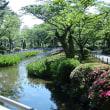 ●富樫バラ園 金沢南総合運動公園 (3)兼六園 満開のカキツバタ 速報(笑)(ソフトフィルターで)