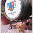 ♪山形二日目ワイン祭りへ♪