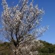 「春告草」と「風待草」