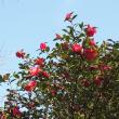 熊本城の野鳥園(その1)