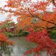 京都永観堂へ・・・・