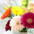 立春のインボルクのサバト☆ ~古きを清め、春の訪れを祝う~