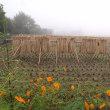 霧の朝 田園通りにて