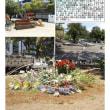花壇-38 横浜公園②