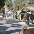 コタを連れて初詣行ってきました♪