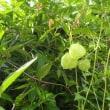 教室にエアコン 子どもを猛暑から守れ/タマスダレ(ゼフィランサス)が咲いています。