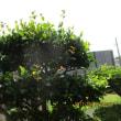 朝、雨が今日も・・・・