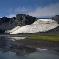 東南極の緑色蘚類は気候変動に屈していると:科学論文