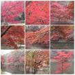 20031124泉自然公園01