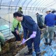 『踏み込み温床づくり』自然菜園スクール「自然育苗タネ採りコース」(2)