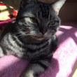 【hana】日向の猫