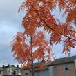 大っきい秋、み~つけた!