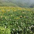 7月12日駒ヶ岳・7月13日・大千軒岳に登る。