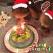『メリークリスマス ♪ 2017』