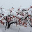 ドカンと雪