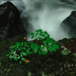 雨の信州 渓流撮り