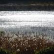 光る池 #2
