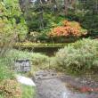 北海道移住体験109 (雨の中の高原温泉紅葉)