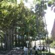 アリイオラニ・ハレとバニヤンツリー