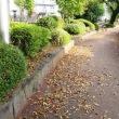サザンカが咲いて、広瀬川の遊歩道には落ち葉が散り敷いて、養田鮮魚店にはブリやカキが入荷してました…