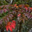 「しっとり秋色!」 いわき 夏井川渓谷にて撮影! 紅葉