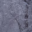 積雪30cmの朝