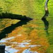 井の頭公園・水面の秋
