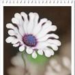 「6月のカレンダー」と紫陽花