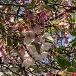 TAVERN Corner &中目黒の桜、その後