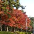 紅葉の散歩道