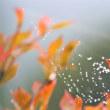 山岳点景:朱露の秋