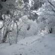 雪の俵山へ