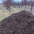 乳酸菌飼料で育てた牛からできた堆肥
